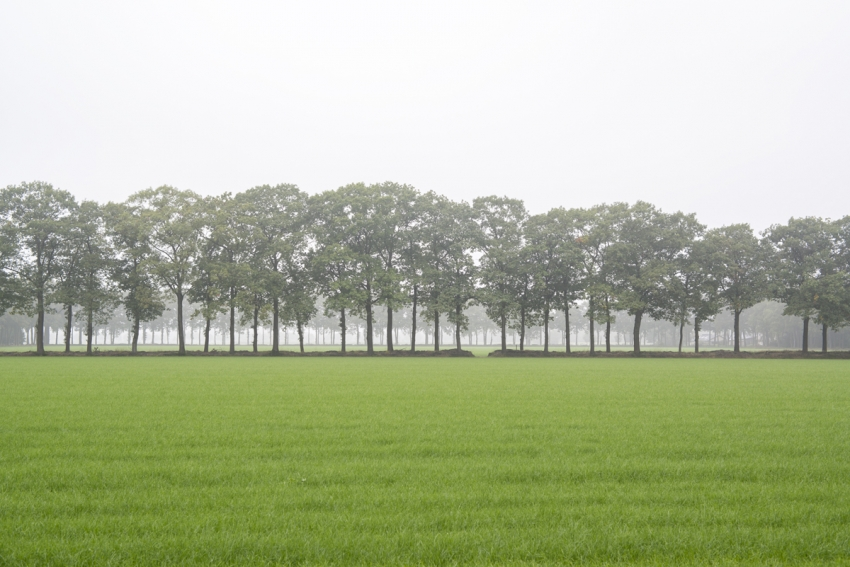©-Yorit-Kluitman-Tussen-Steden-De-Rips-Gemeente-Gemert-Bakel-850x567.jpg