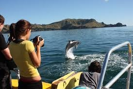 Bay of Islands - Explorer The Bay Tour - From $270 NZD per person