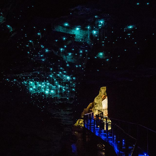 Looking for something to do over this rainy Queens Birthday weekend? Come with us and stay dry on a fully guided day tour to Waitomo Caves from Auckland, and discover these amazing caves and hundreds of glow worms sparkling above you like a clear, starry night. Great fun for the whole family! Book now on one of small group tours via our website @cheekykiwitravel #nzmustdo #queensbday #longweekend #smallgrouptours #waitomocaves #glowworms #explore #purenz #nature #naturephotography #nztours #northislandnz #familyfunday #rainydays