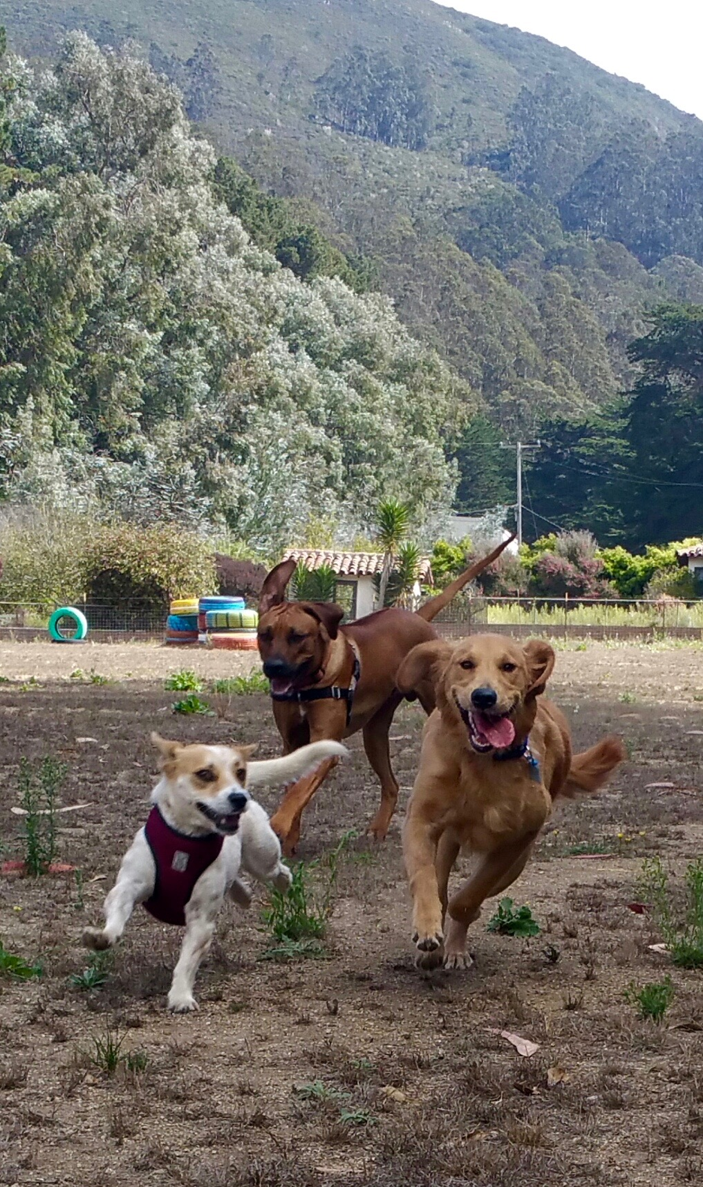 Running with the Rascal Pack!