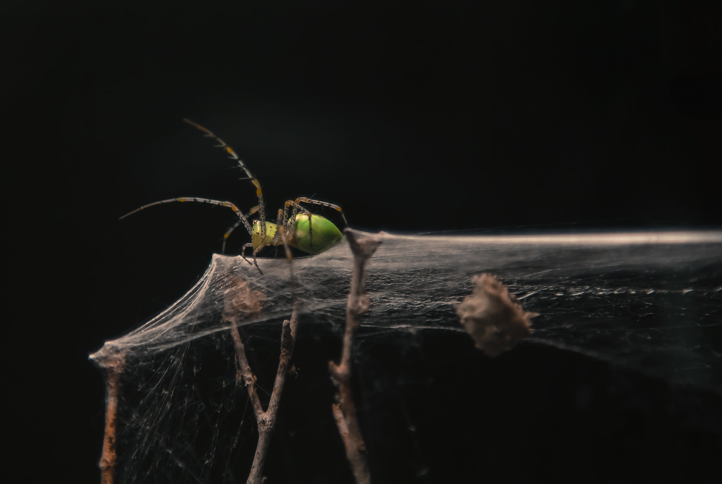 Radioactive Spider.jpg