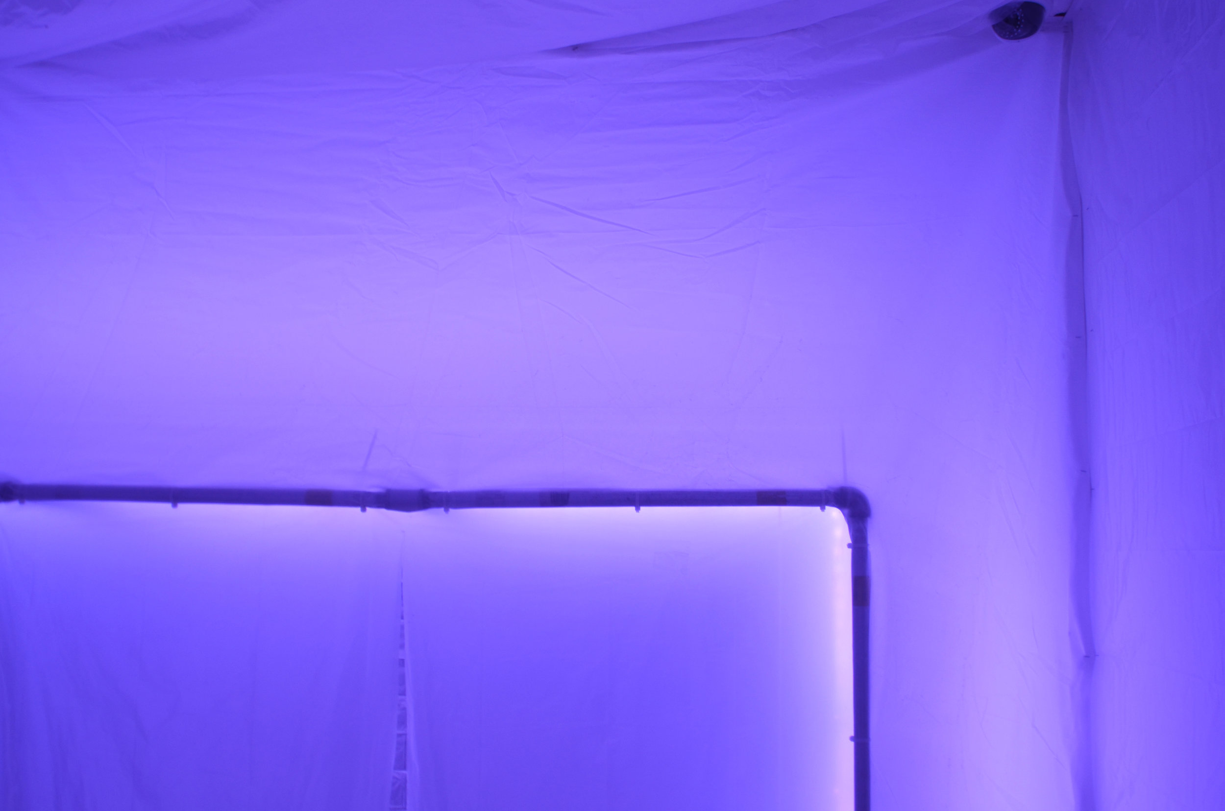 Neon Iv.jpg