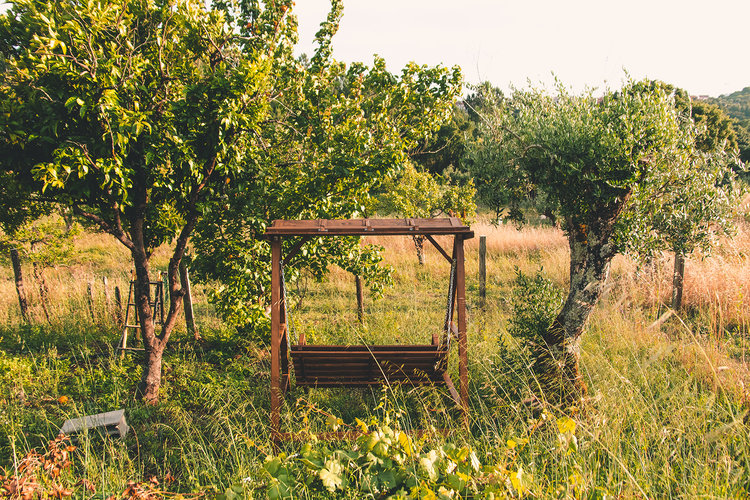The CO Project Farm olive and citrus trees