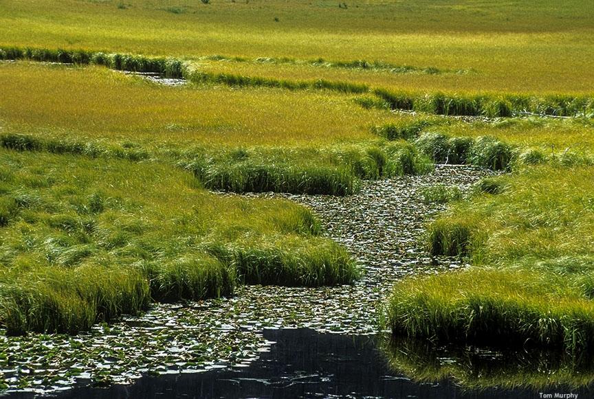 Whitefish Trail_Brian Schott.jpg
