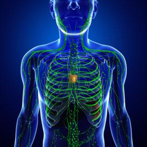 lymphatic-system-300x300.jpg