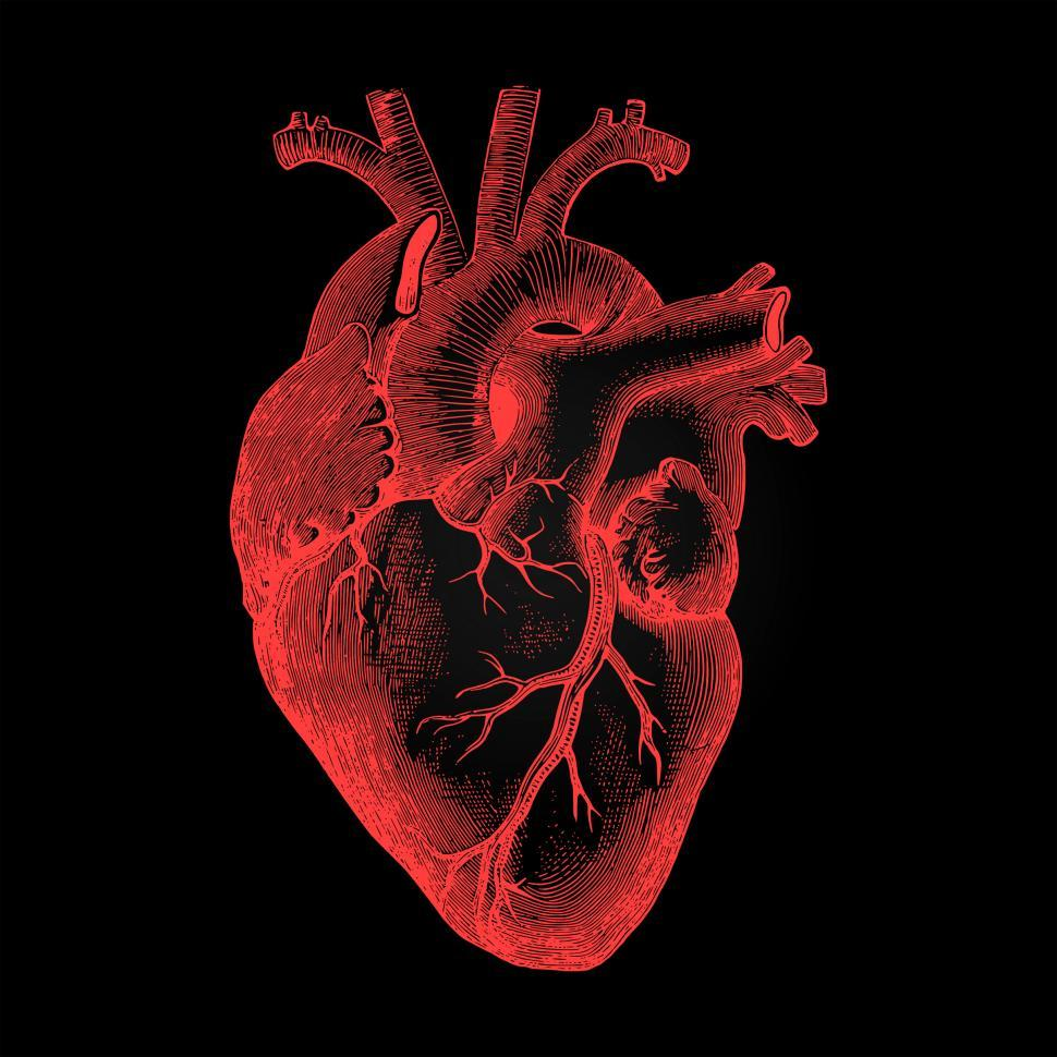 human-heart-anatomical-rendering-on-dark-background.jpg