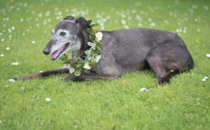Photo Image by Kim Gunn at  Doodleshots . Modelled by Rosie. Flowers by  Urban Flower Farmer