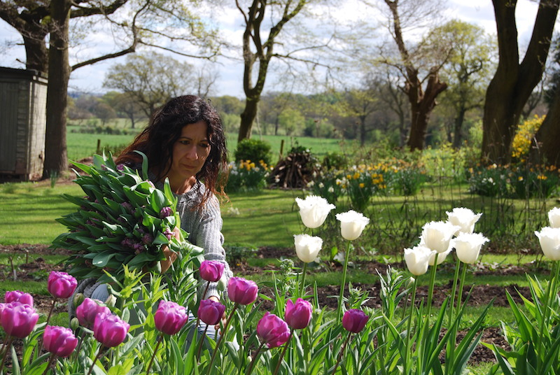 Picking Tulips at our cutting patch in NW London…..you can read more about our cutting patch  here