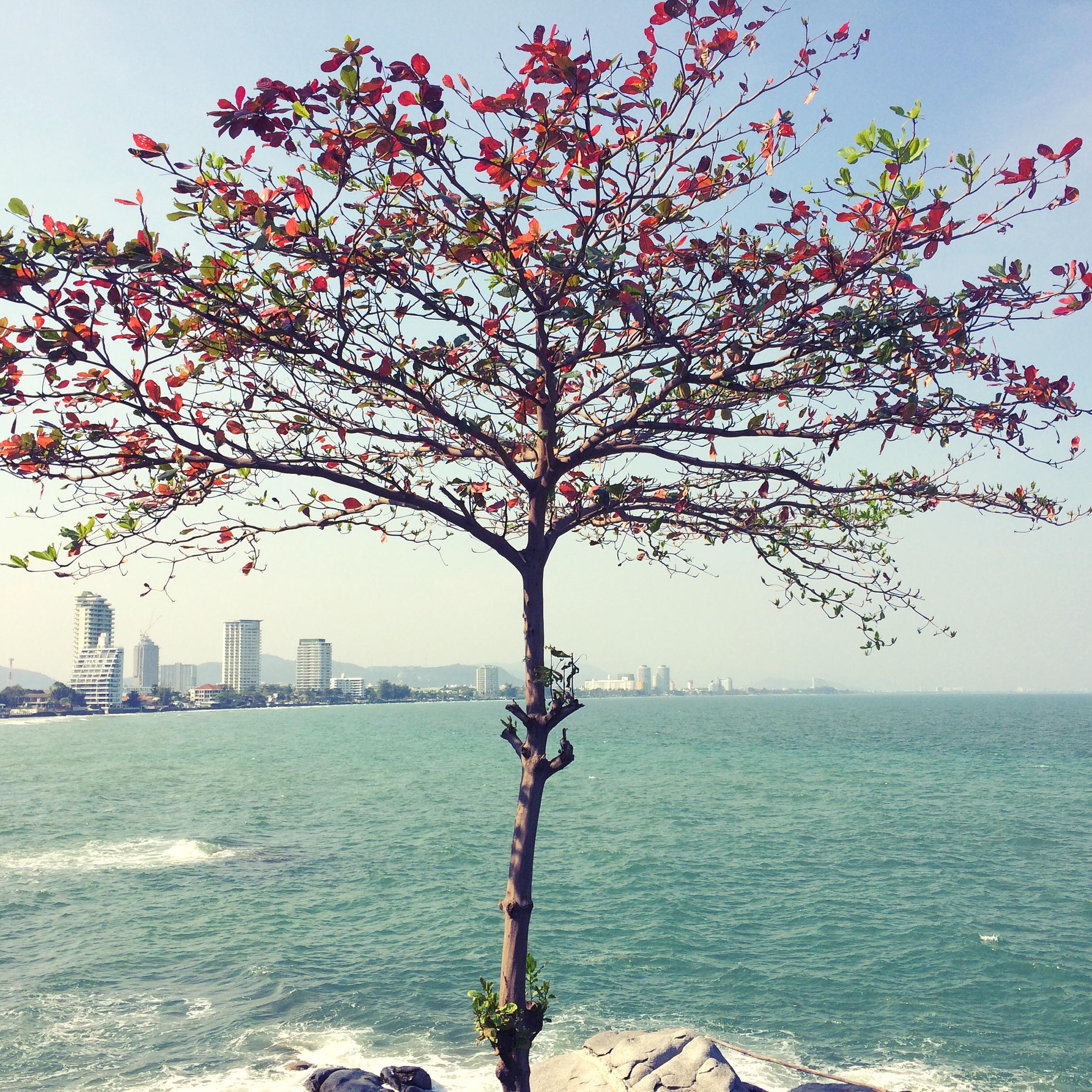 ….    Hua Hin, Thailand    ..    หัวหิน, ประเทศไทย    ….