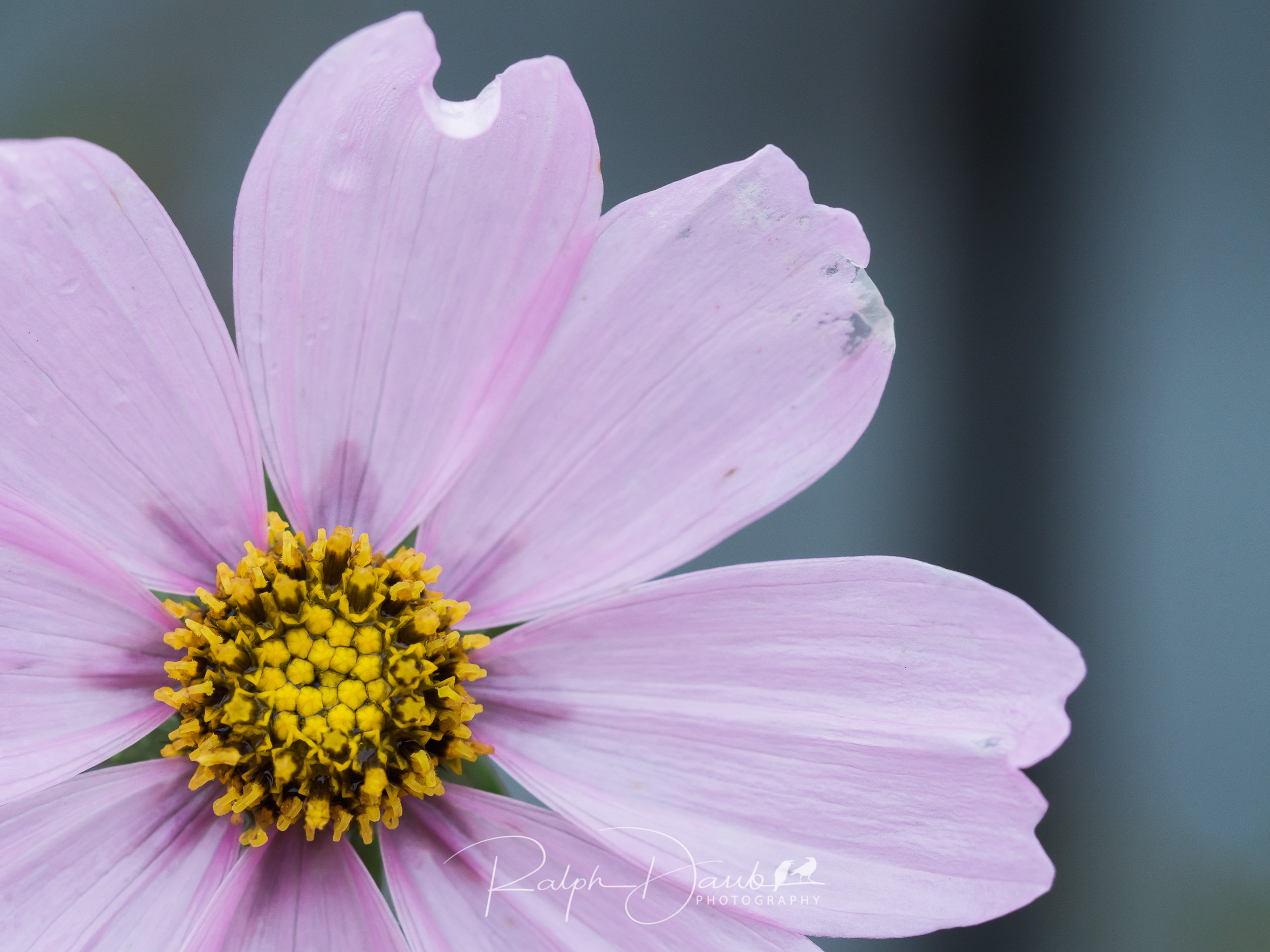 2017-12-02 - Raindrops, Heart Cofee with Cassie, Flowers - 15h35m.jpg