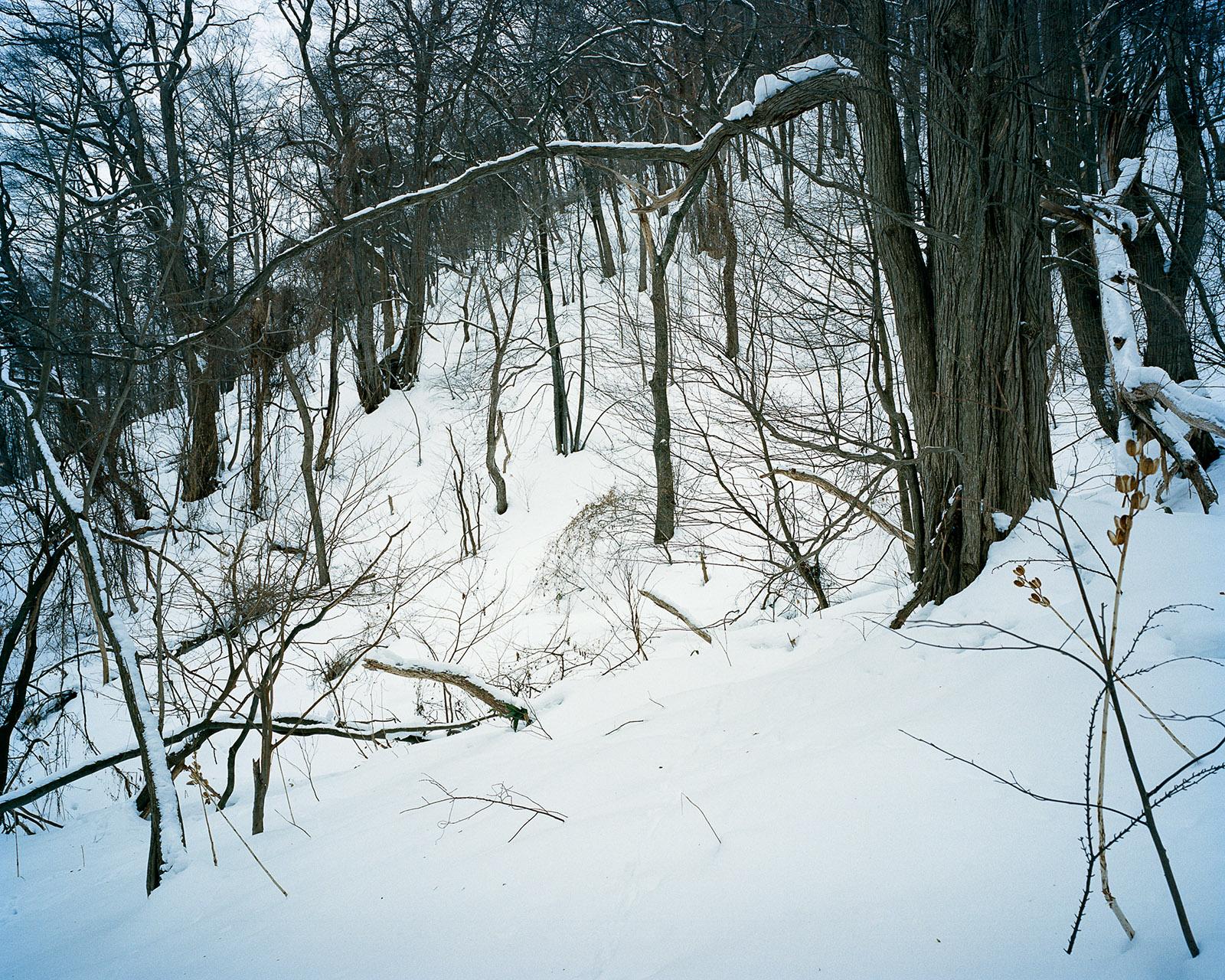 Sapporo White 31.jpg