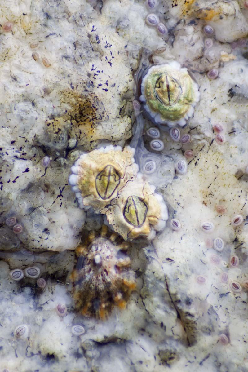 Barnacle Cluster.jpg