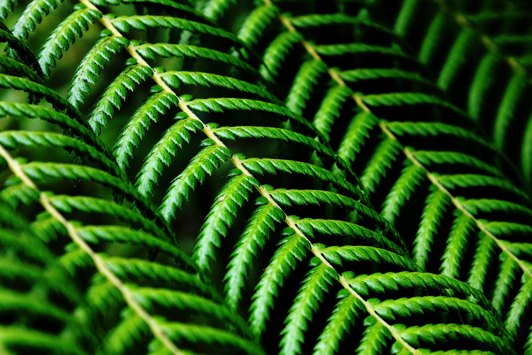 Green Veil copy 10x15 300 dpi.jpg