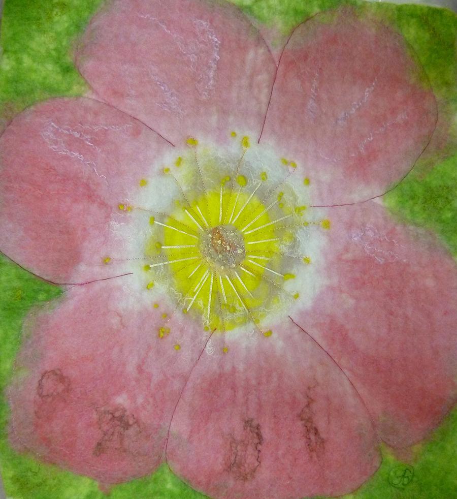Summer Bloom - Geraldine Beirne.jpg