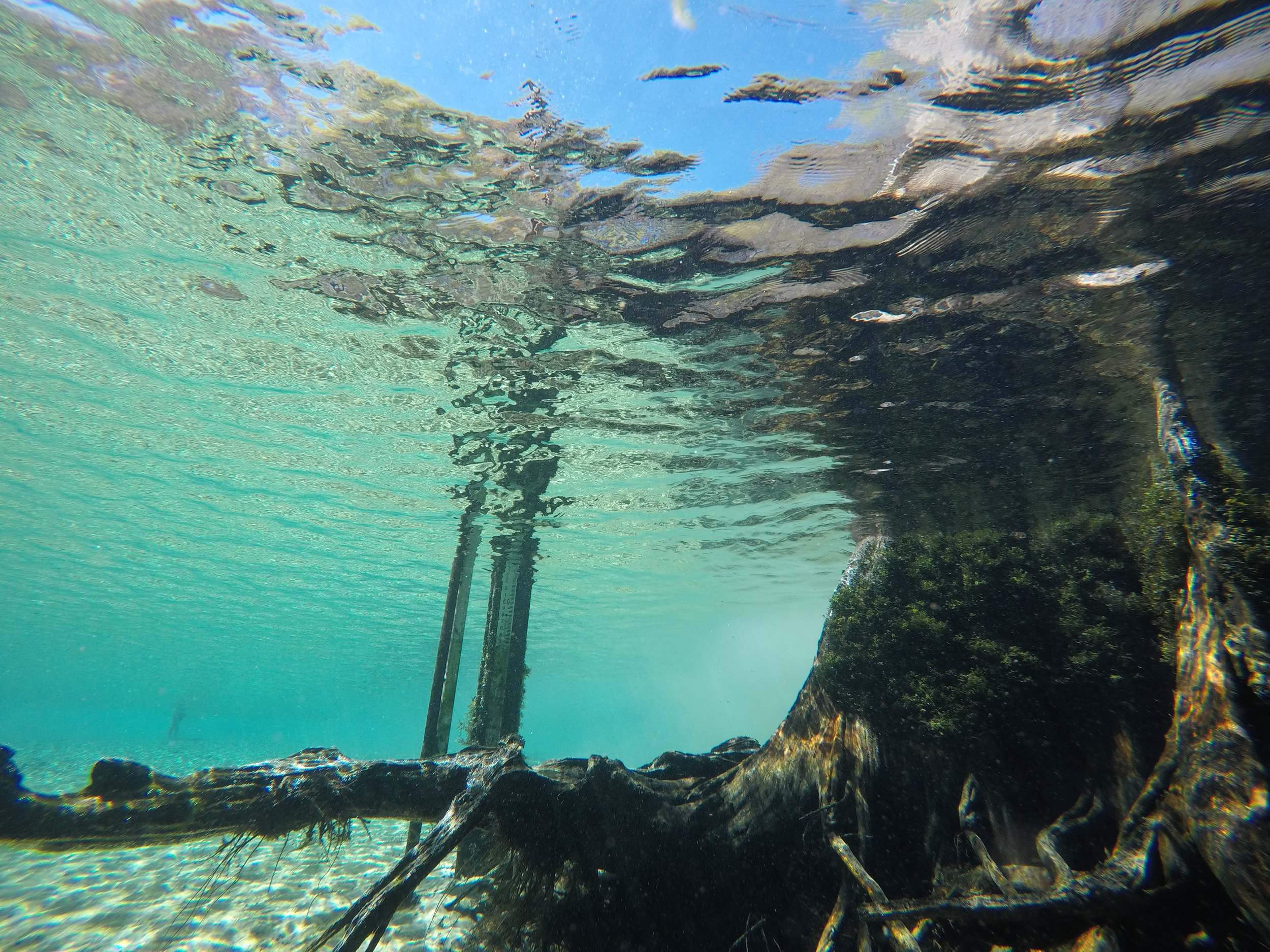 WELCOME TO HOLMES CREEK DIVE POST, LLC -