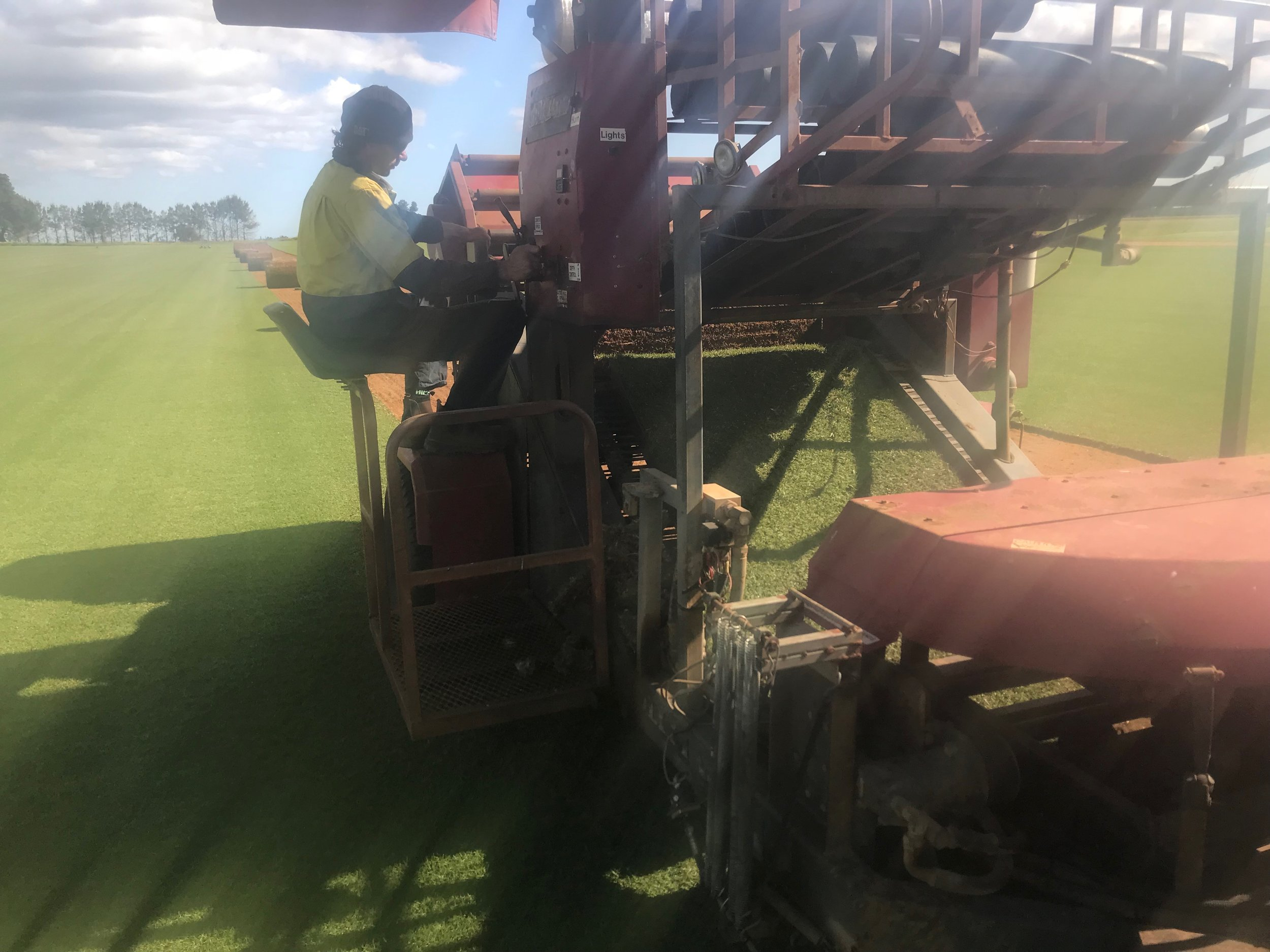 Jumbo Roll Kikuyu Harvesting