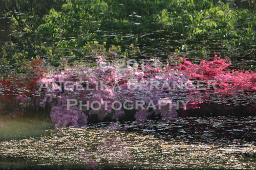 Angelika-Spranger-Pretty-in-Pink.jpg