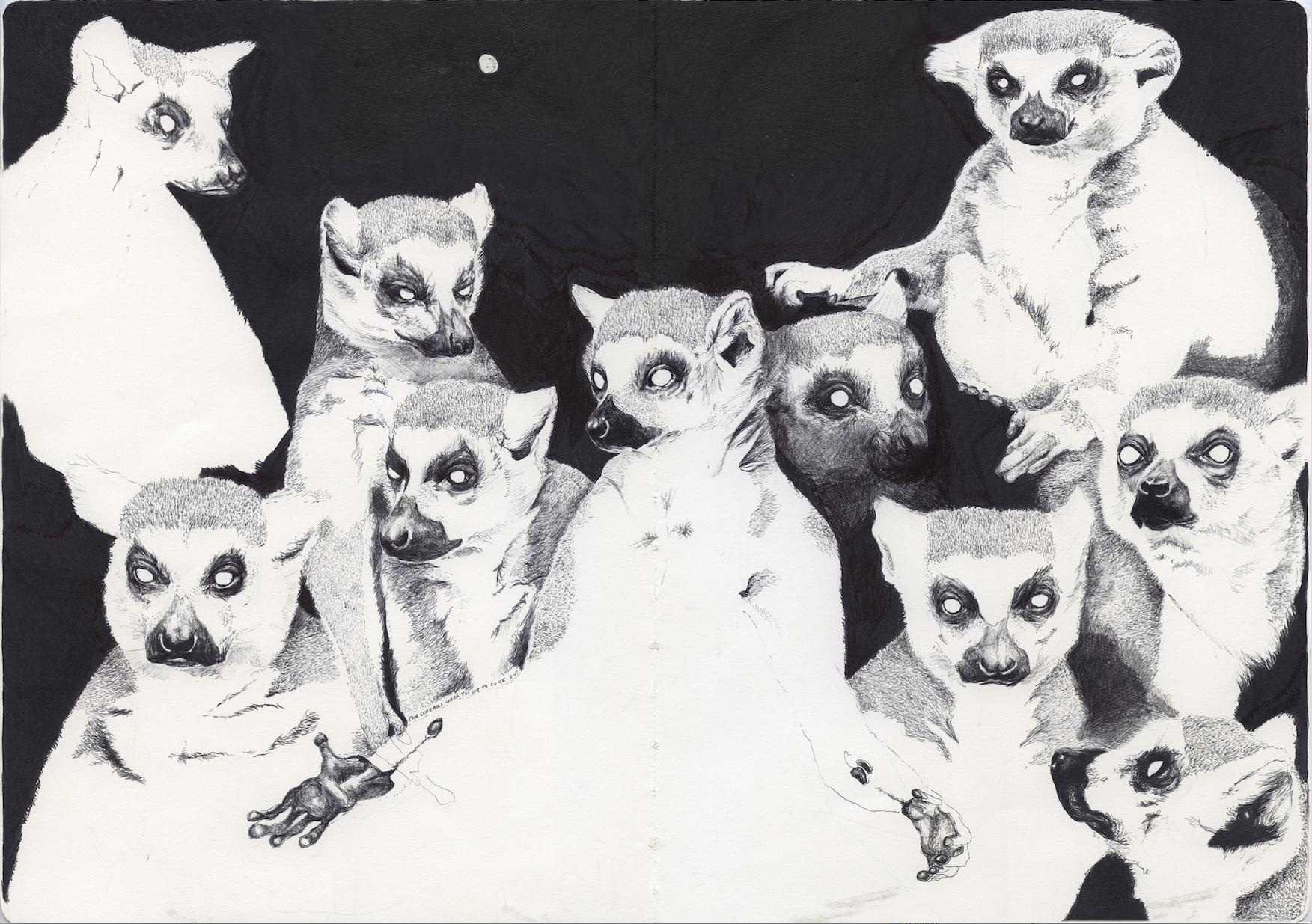 lemurs.jpeg