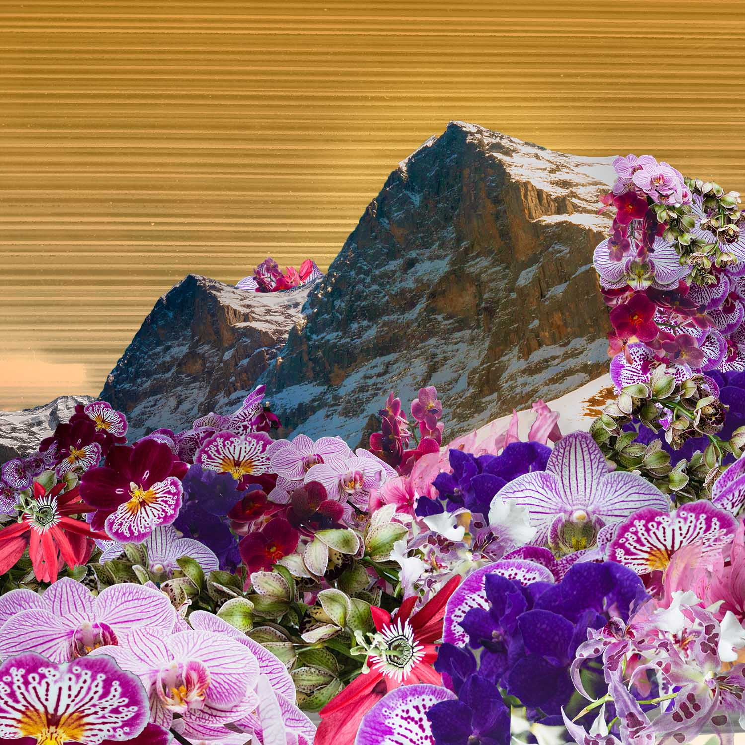 Orchid Mountain.jpg