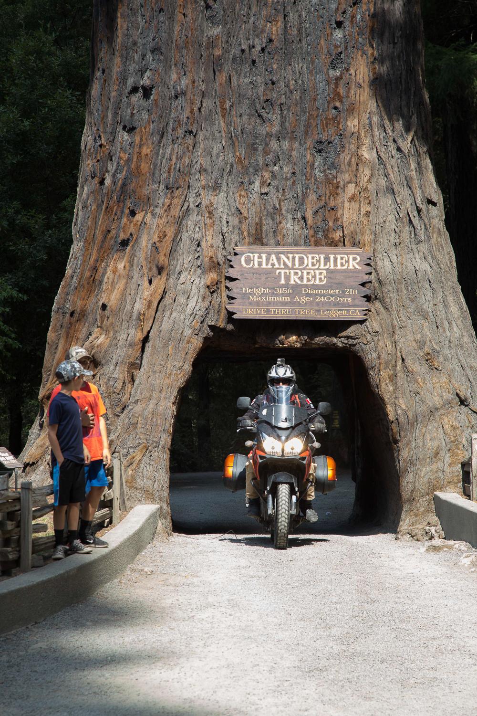 _MG_3267__80_WestCoast1_Redwood_Drivethrough_Treeweb_1500.jpg