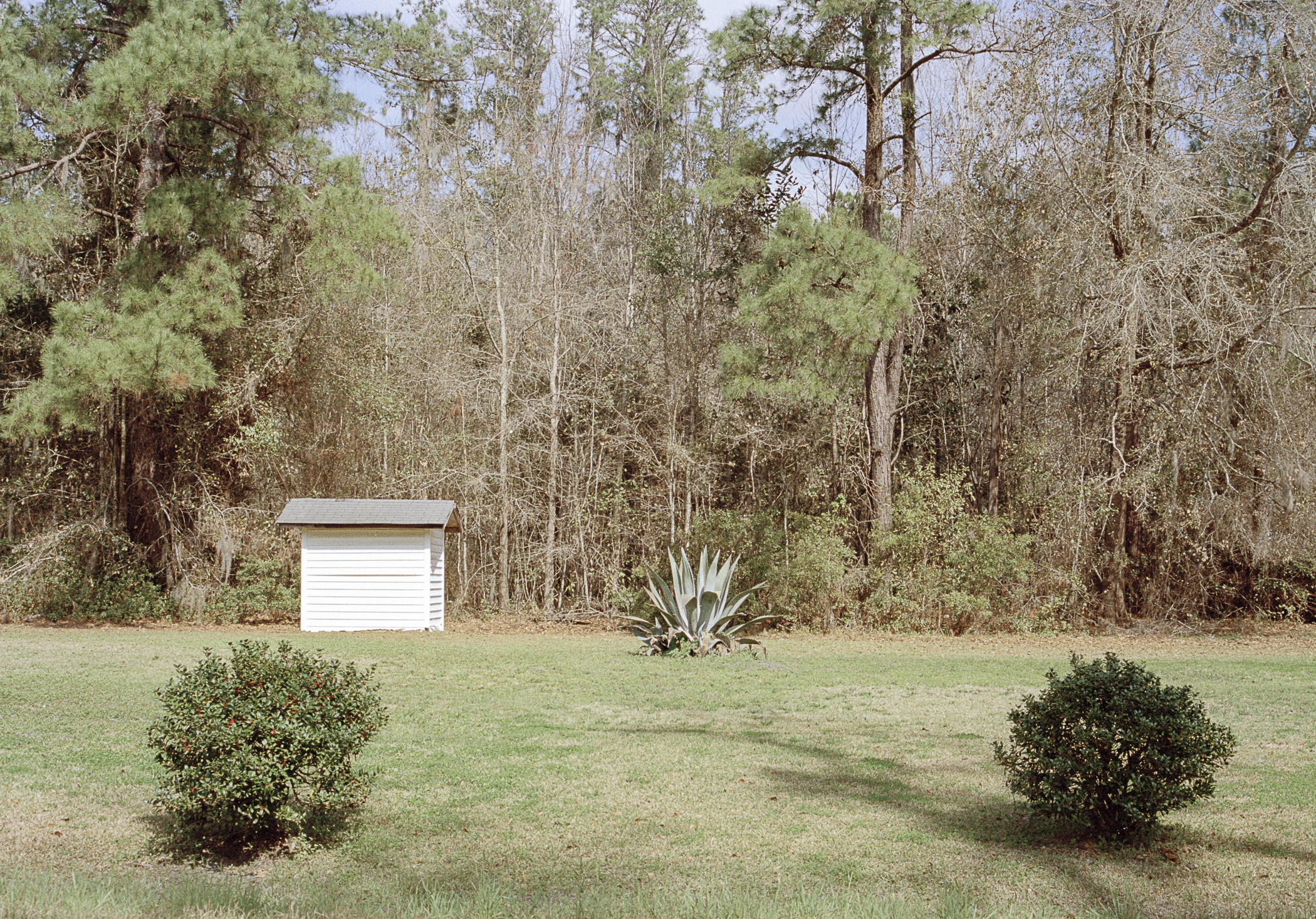 two bushes and one white shed.jpg