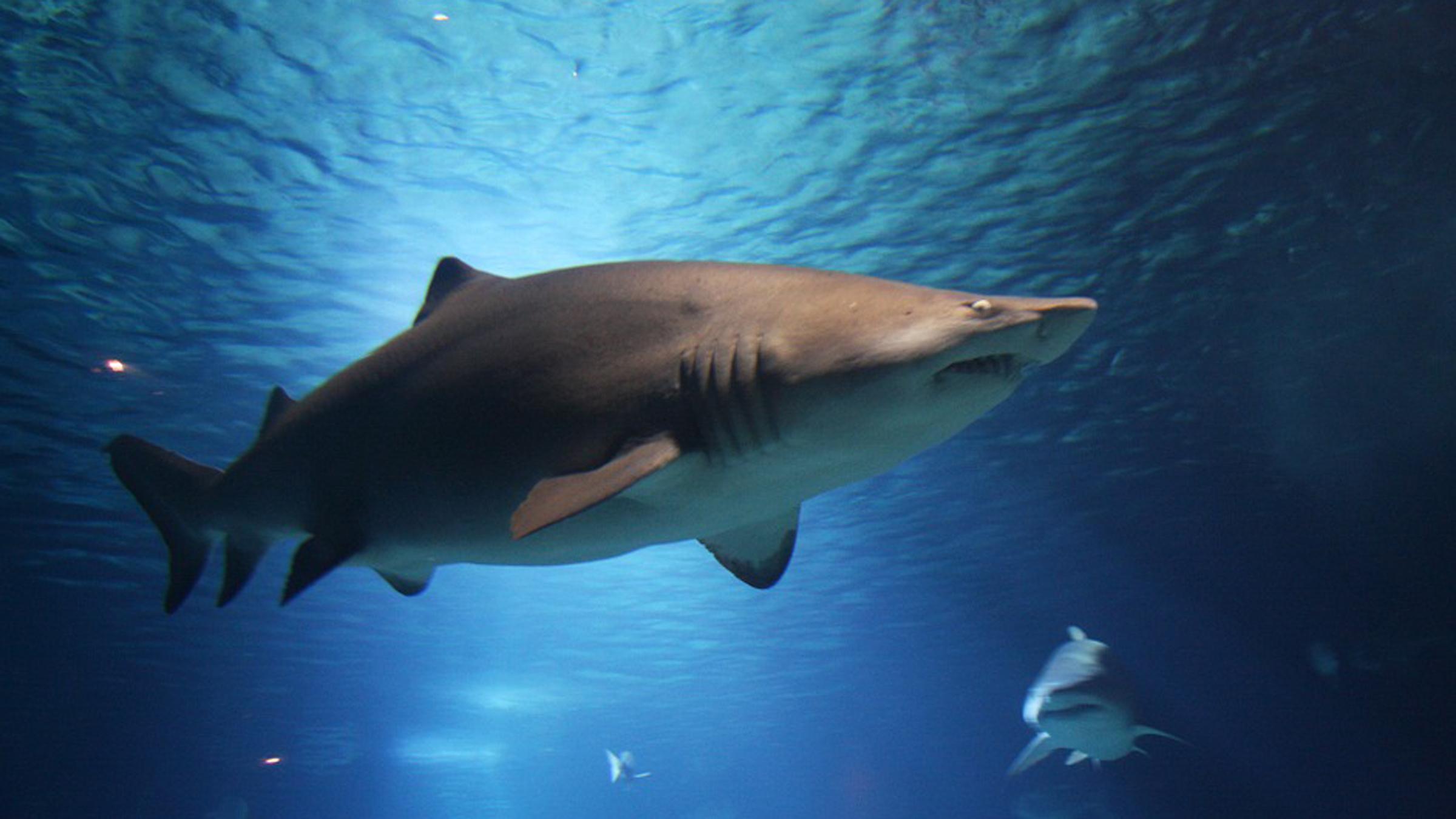 Daisy and Otto why do we need sharks