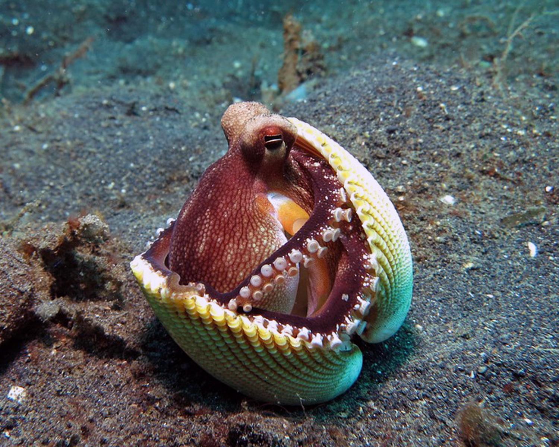 octopus-1144665_960_720.jpg