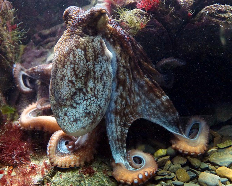 octopus-428745_960_720.jpg