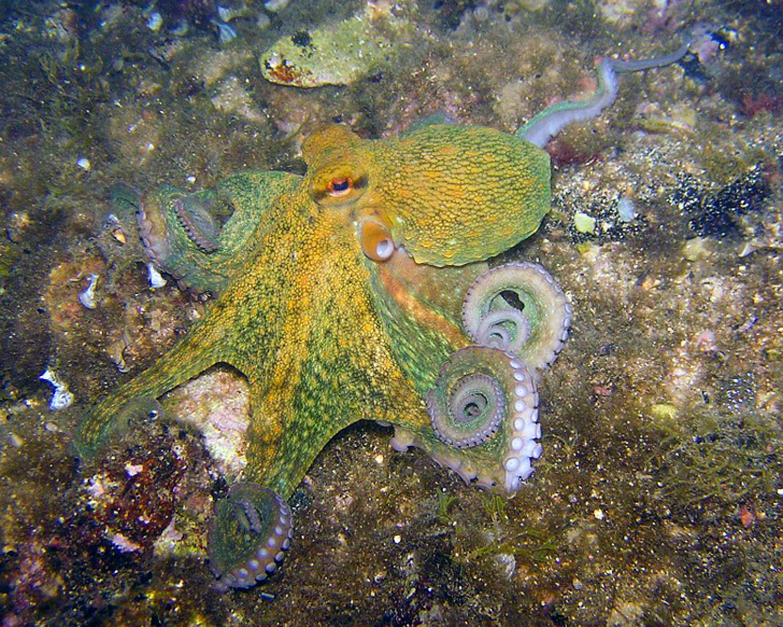 octopus-230009_960_720.jpg
