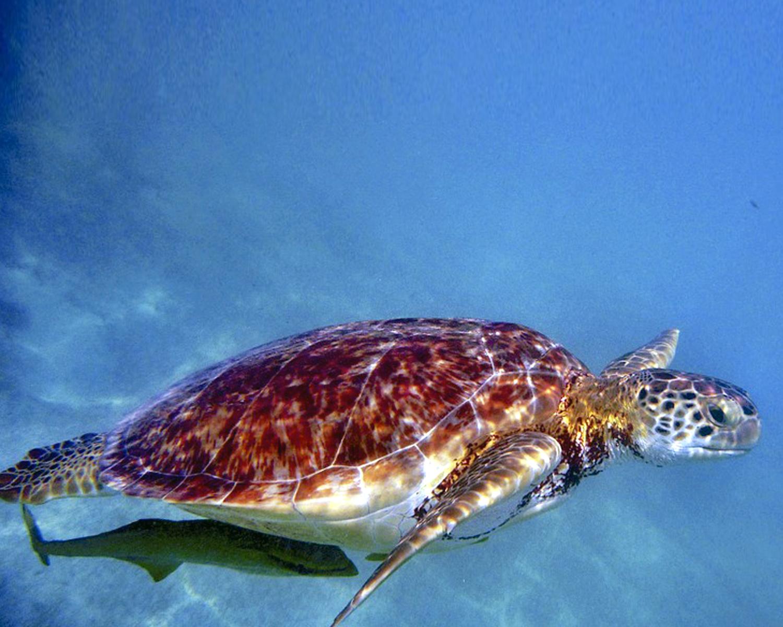 water-turtle-958981_960_720.jpg
