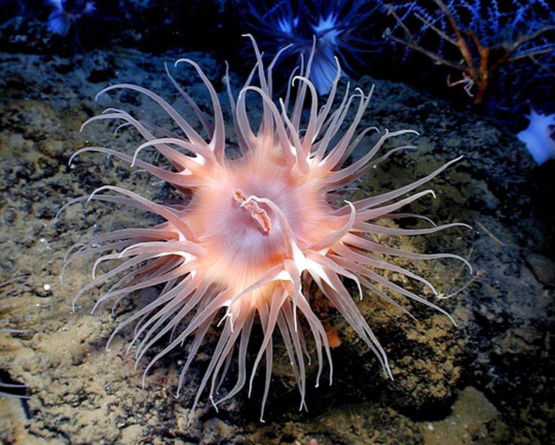 Daisy and Otto Childrens Book - Sea Anemone Facts