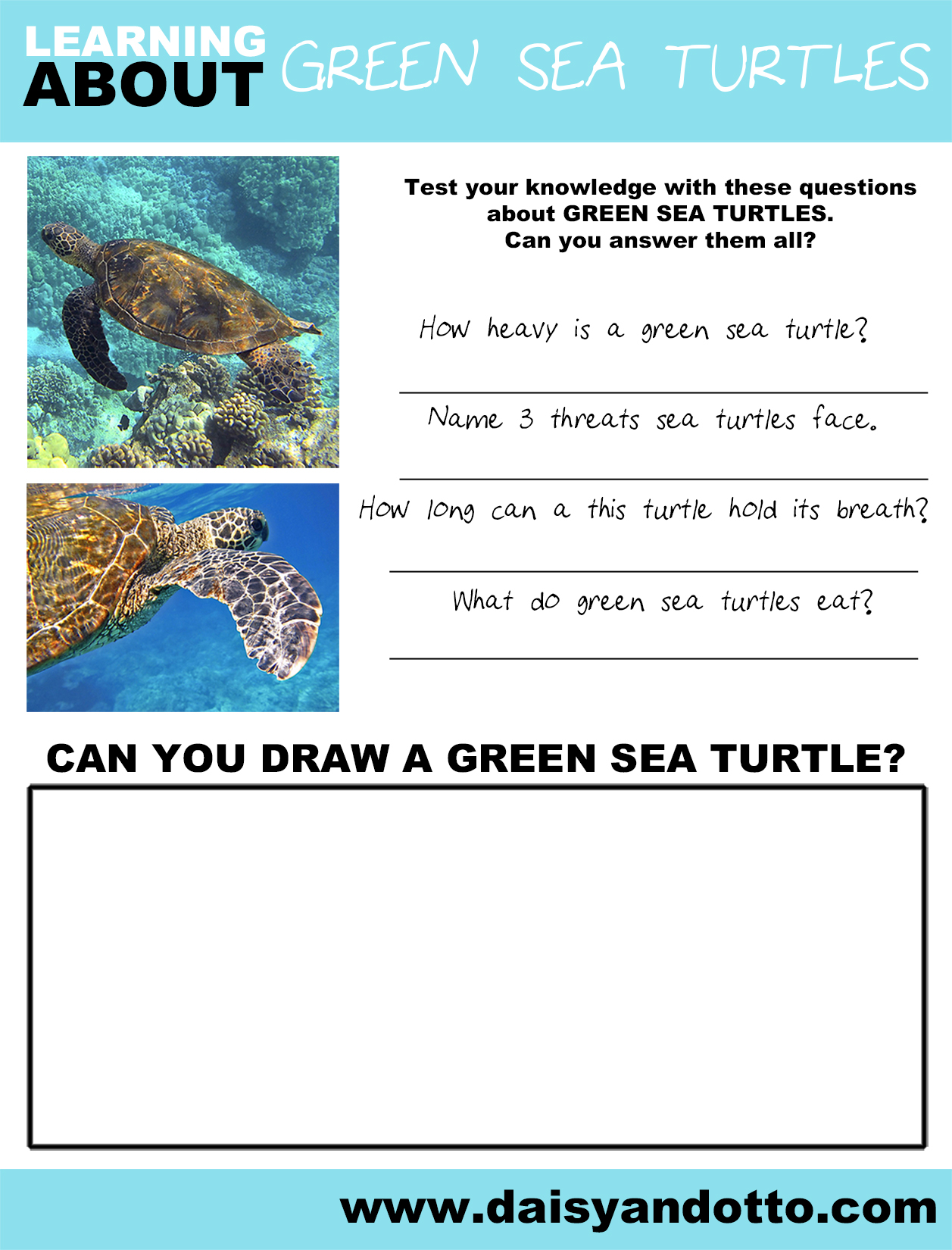 Daisy and Otto - Learning about - GREEN SEA TURTLES.jpg
