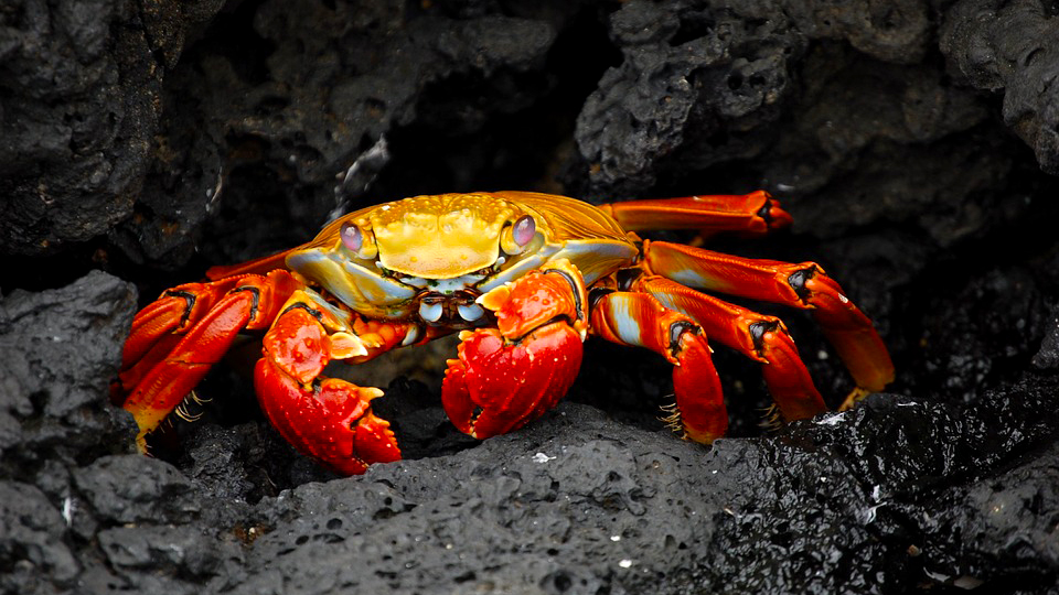 2019 Daisy and Otto Blog Photo Gallery Crabs 1.jpg