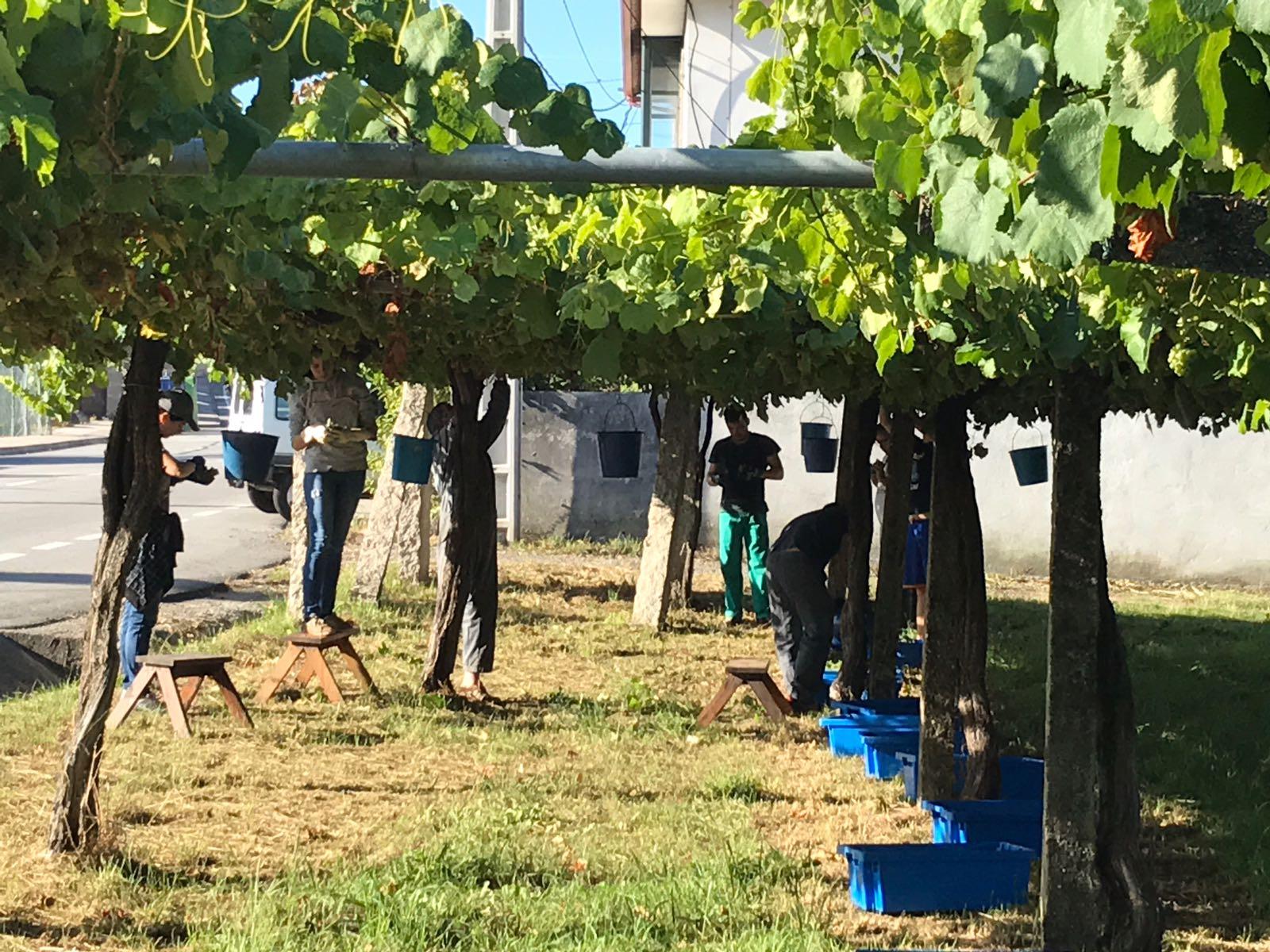 Fento Vineyard- Pergola.jpg