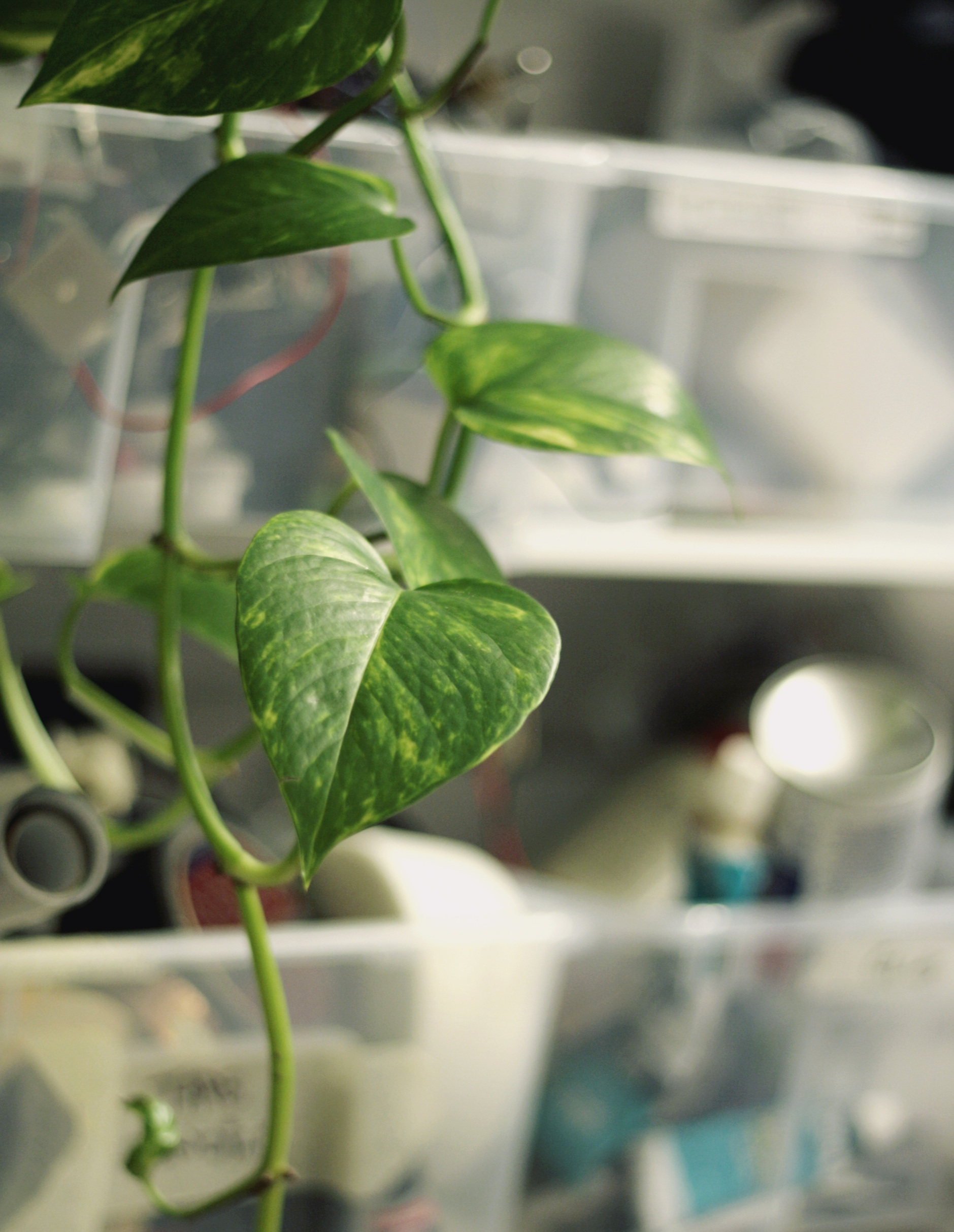 the Devil's Vine in our prototyping lab