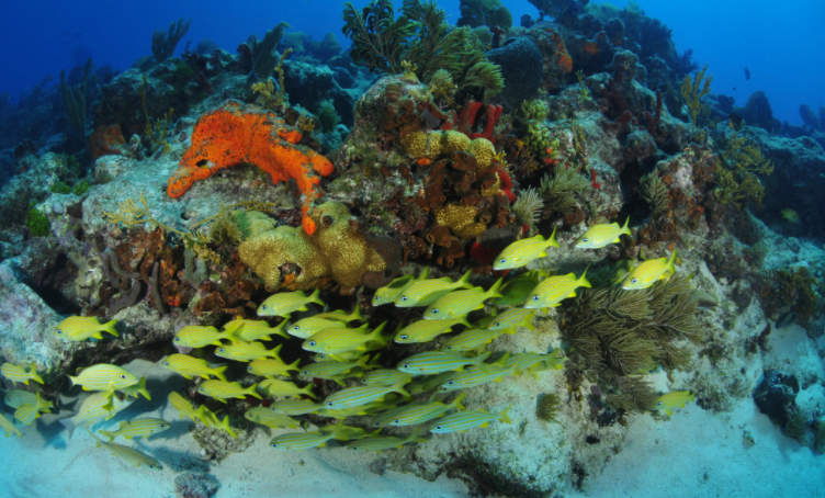 Fisheries and Ocean Health in Mexico