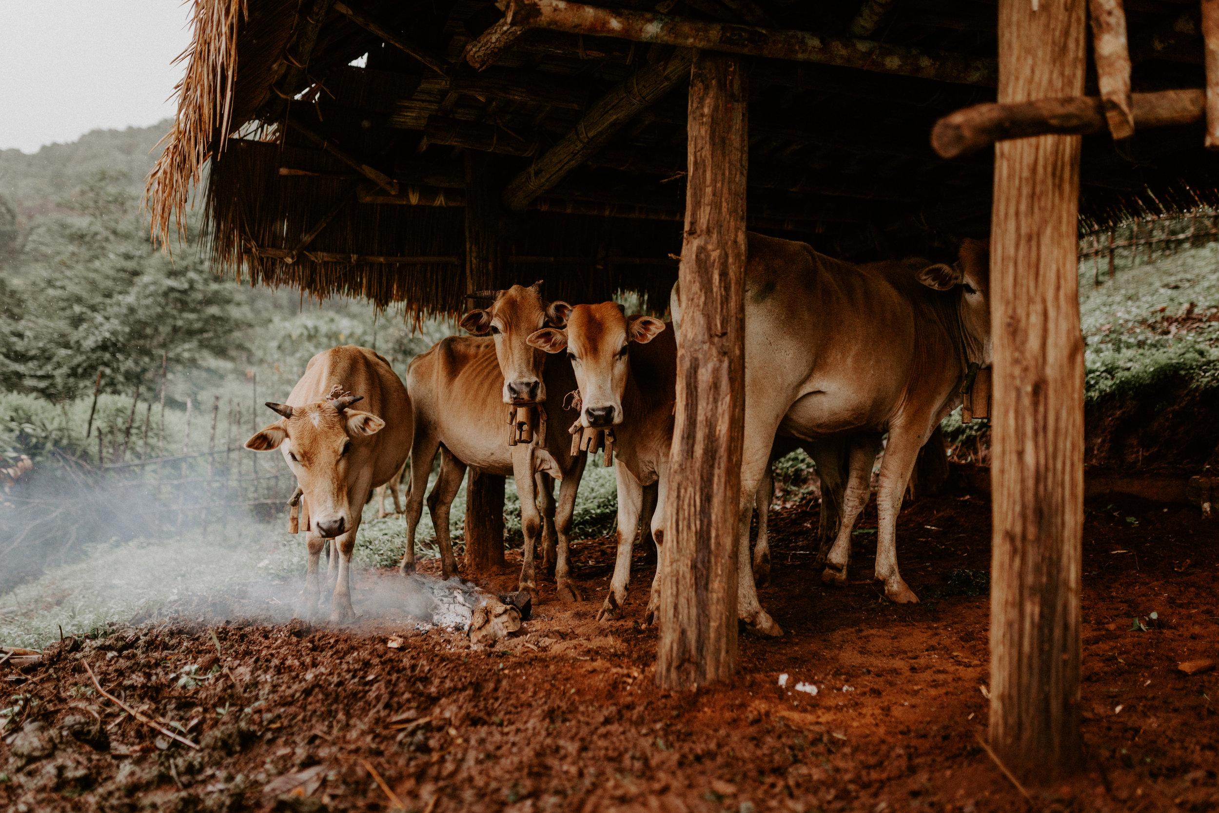 Thailand-MyanmarHike_MS0009.JPG