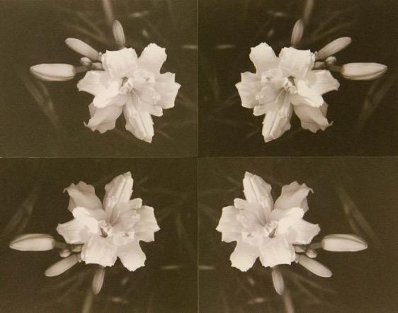 daylilies.jpeg