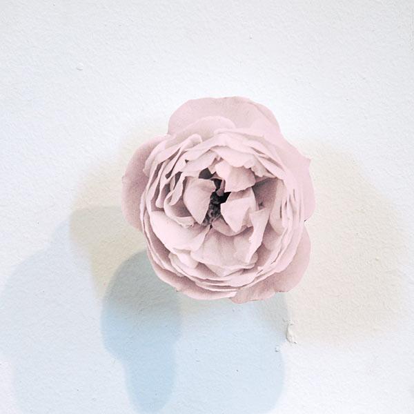 rose_detail_2011.jpg