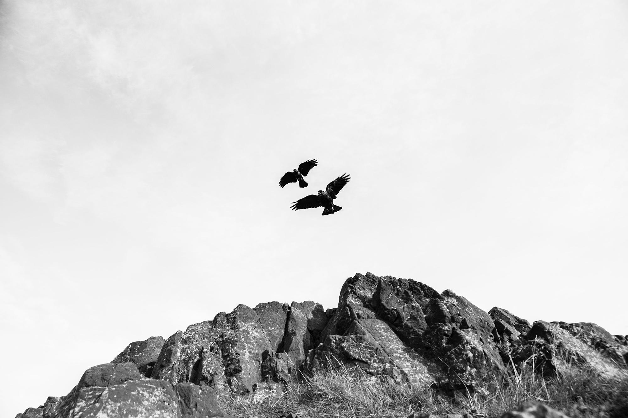 Edinburgh-Crows-Kati-Auld.jpg