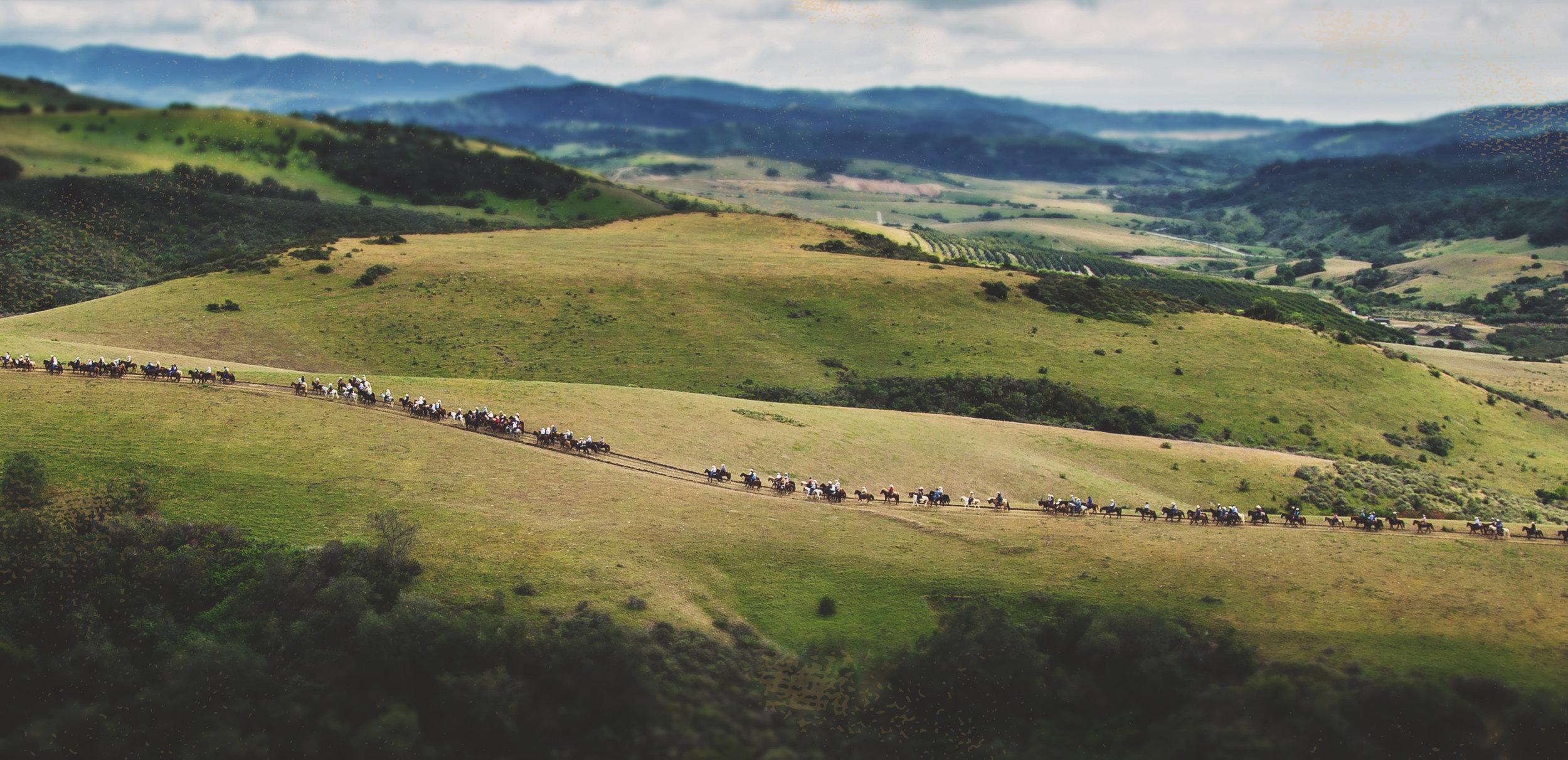 Boy Scouts  - Ranch cows 2.jpg