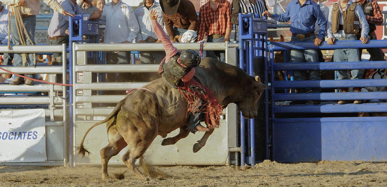 2_Bull-Riding.jpg
