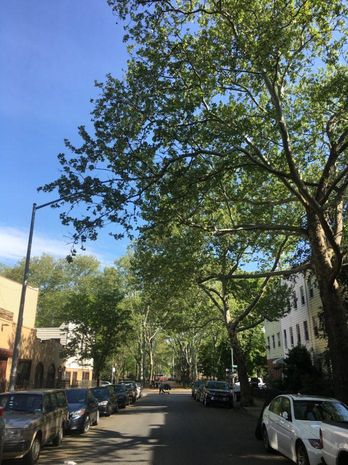 brooklyn street.jpg