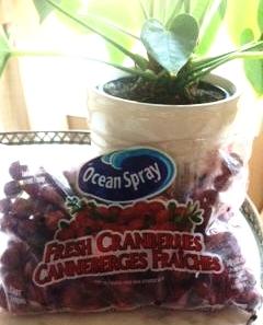 Ocean Spray Fresh Cranberries