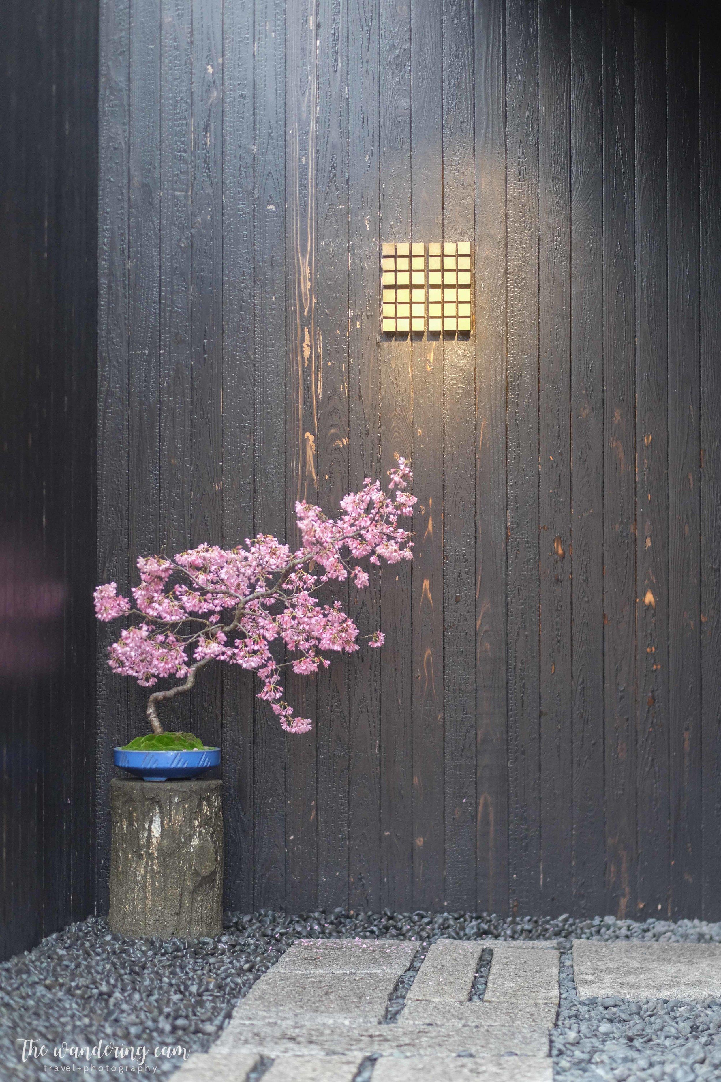 thewanderingcam_sakura_koffeemameya-3952.jpg