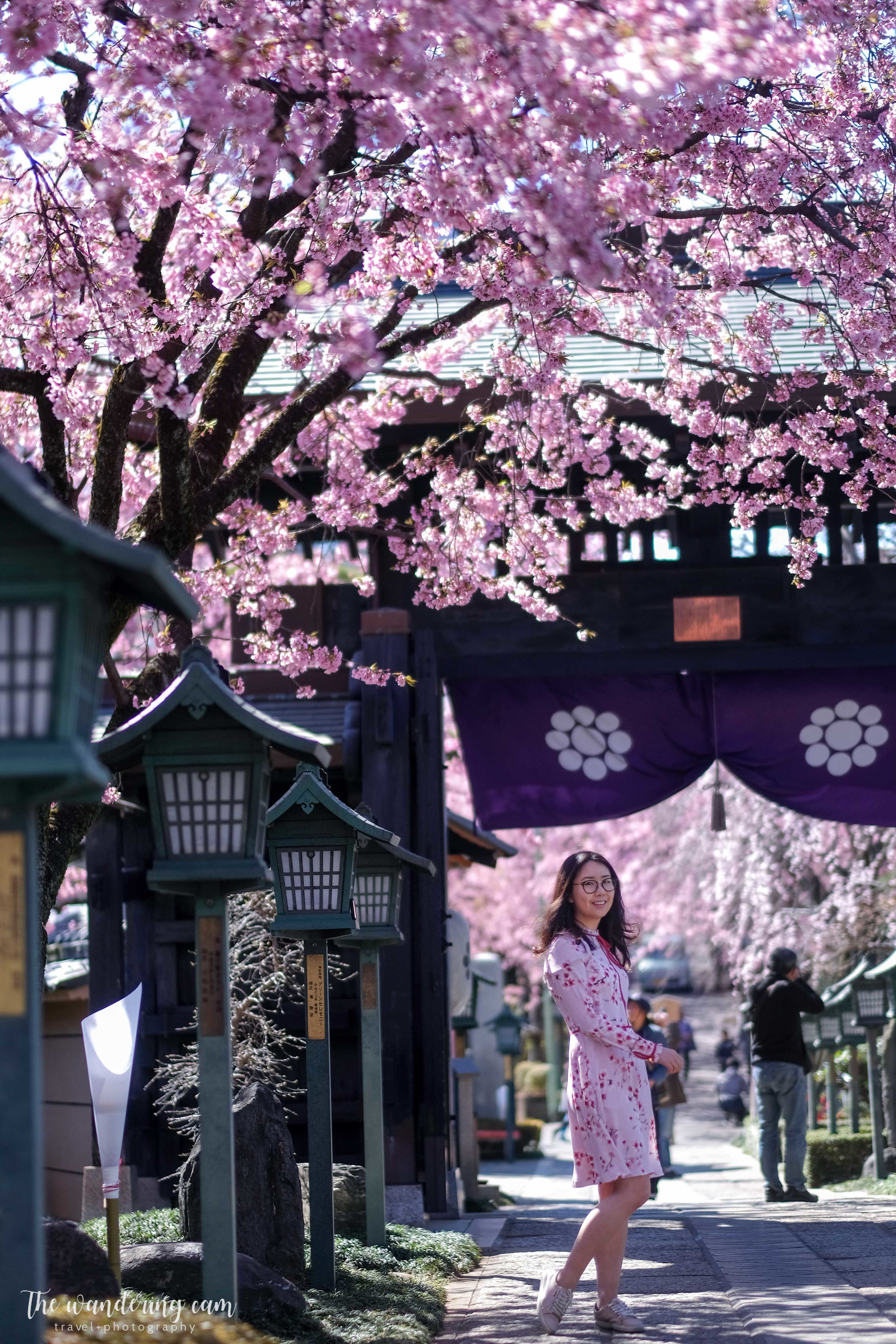 thewanderingcam_sakura_mitsuzoin-4421.jpg