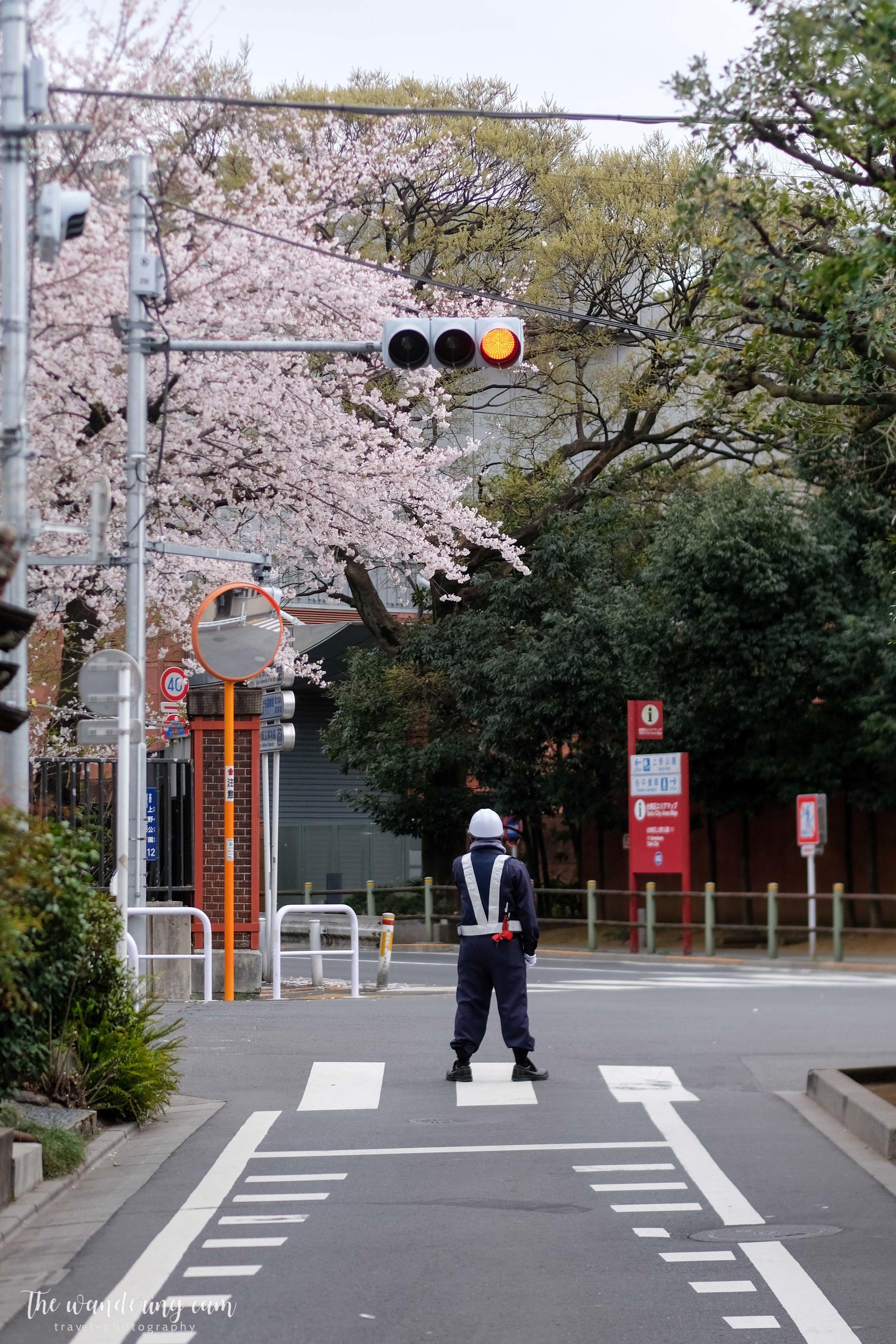 thewanderingcam_sakura_yanaka-4872.jpg