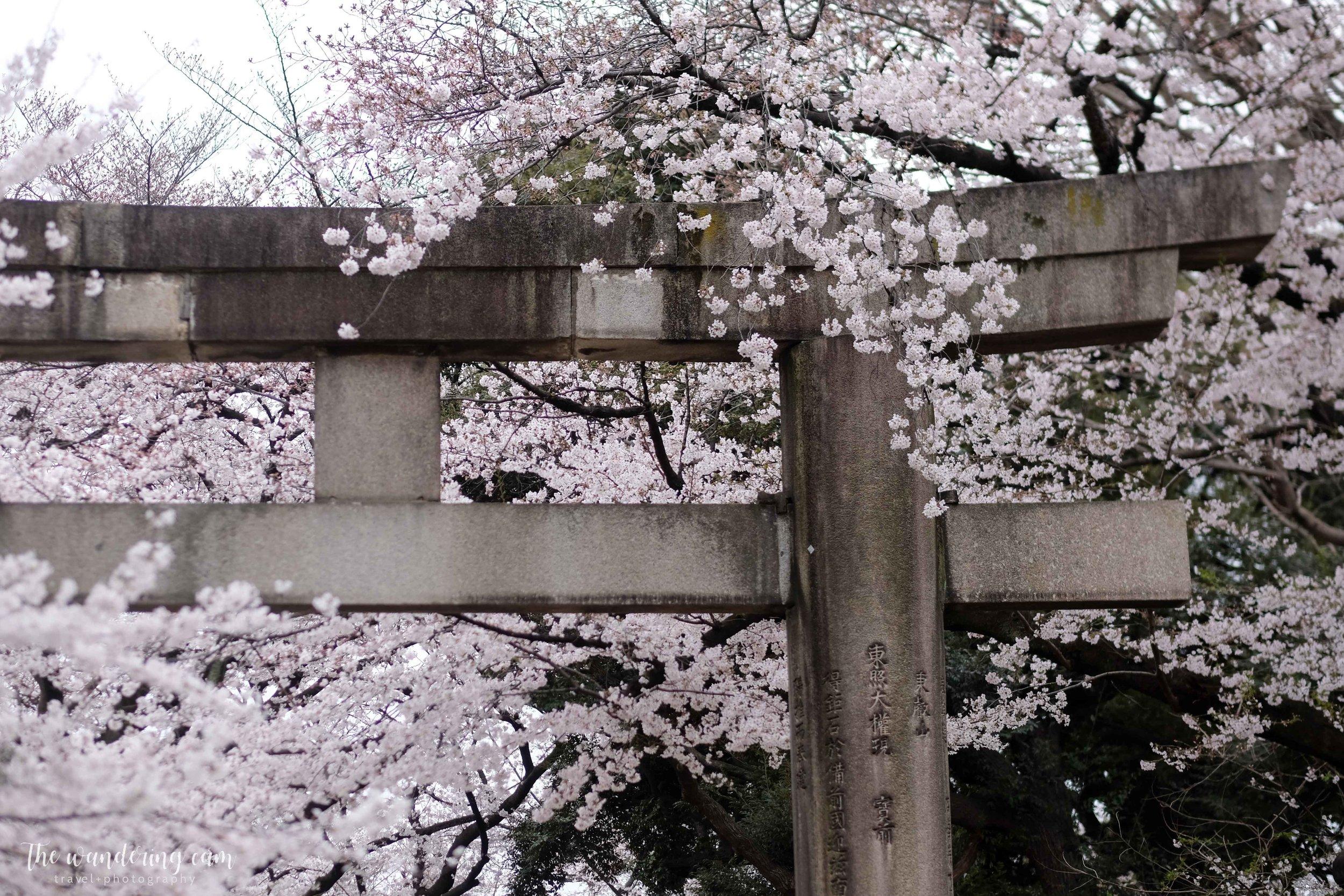 thewanderingcam_sakura_uenopark-4884.jpg