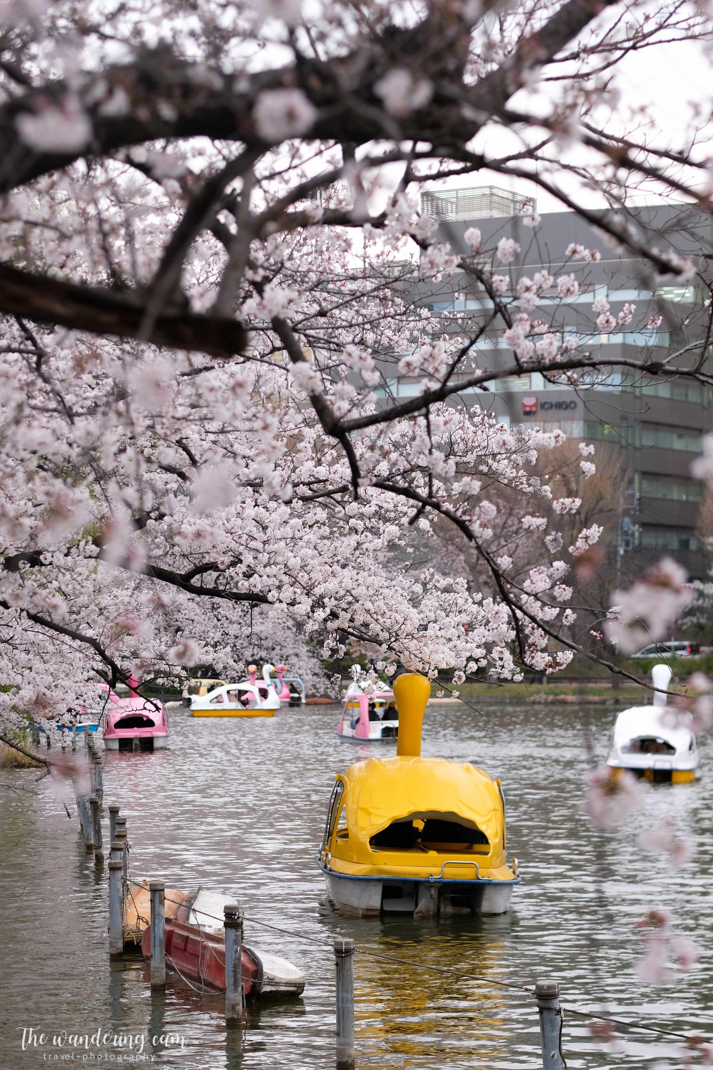 thewanderingcam_sakura_uenopark-5001.jpg