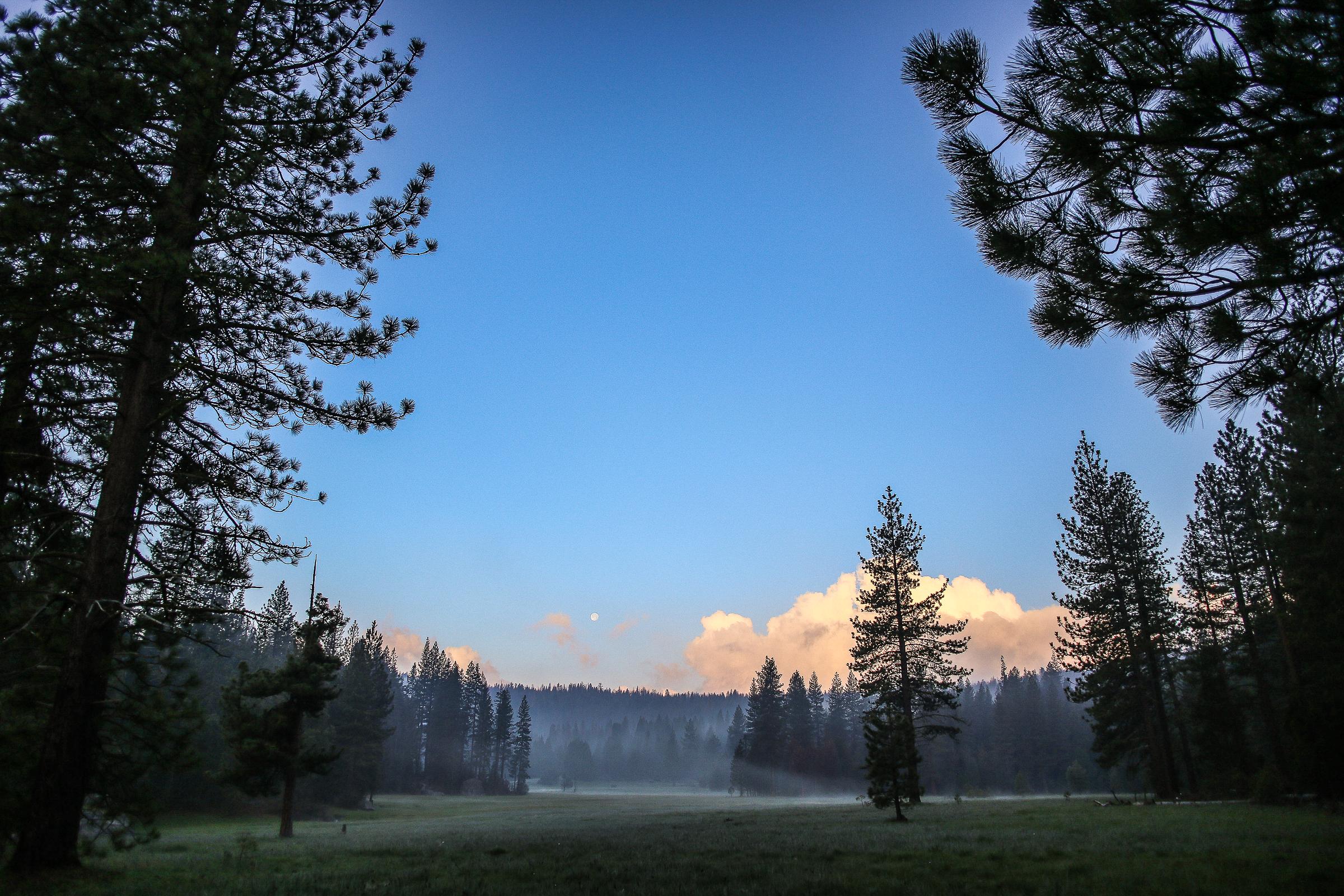 Sequoia_May2017-7409.jpg
